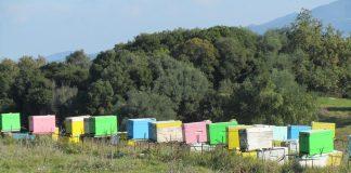 Εξιχνίαση κλοπής 115 κυψελών στο νομό Ροδόπης - Σχηματίσθηκε δικογραφία σε βάρος 39χρονου