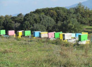 Ορίστηκε η επιχορήγηση για την εφαρμοσμένη έρευνα στη μελισσοκομία
