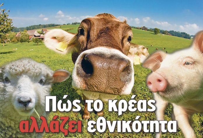 Oργιάζει η νοθεία στα κτηνοτροφικά προϊόντα