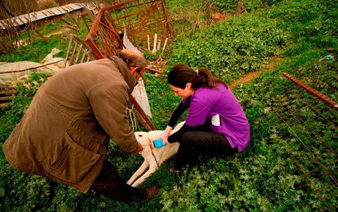Μετέωρα: Δωρεάν αντιλυσσικοί εμβολιασμοί και τσιπάκι σε 18 ποιμενικούς σκύλους