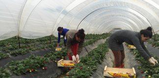 Οι μετανάστες εργάτες γης μπορούν να λάβουν άδεια διαμονής, λέει η Αχτσιόγλου