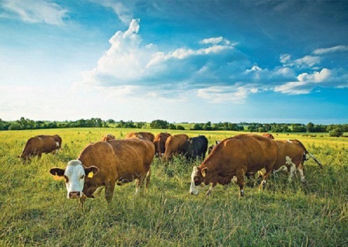 Φ.Αραμπατζή: «Φιάσκο» στη βιολογική κτηνοτροφία – βγάζει εκτός όλους τους κτηνοτρόφους