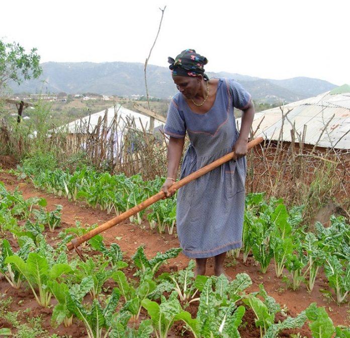 Η ξηρασία μείωσε τον γεωργικό τομέα στη Ν. Αφρική