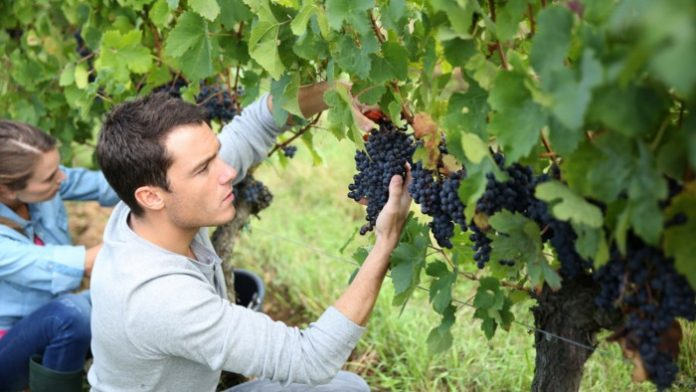 Η ηλικιακή διάρθρωση των αγροτών στην Ευρώπη