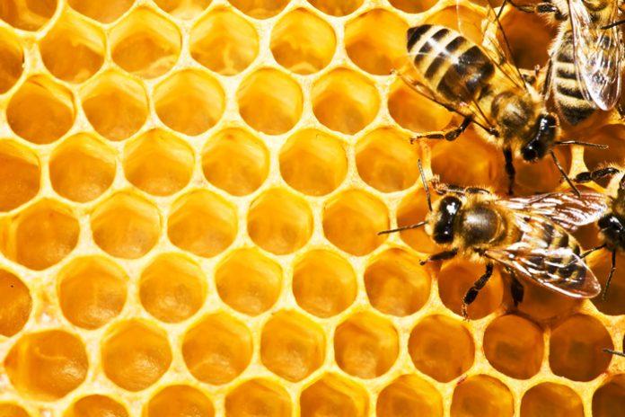ΑΜΘ: Πρόσκληση ένταξη στη δράση 4.1 για αναλύσεις μελιού