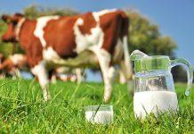 Μειώνουν τα συμβόλαια με τους κτηνοτρόφους οι γαλατοβιομηχανίες
