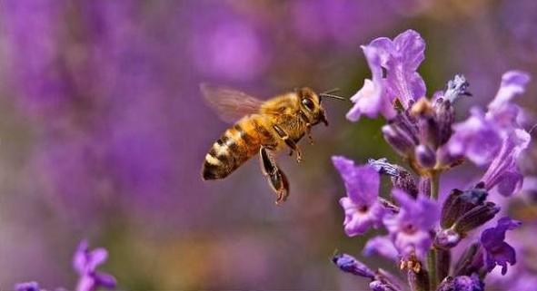 Ημερίδα μελισσοκομίας από το κέντρο «ΔΗΜΗΤΡΑ»