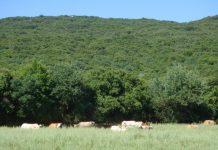 Μια βραβευμένη φάρμα στα Ακαρνανικά