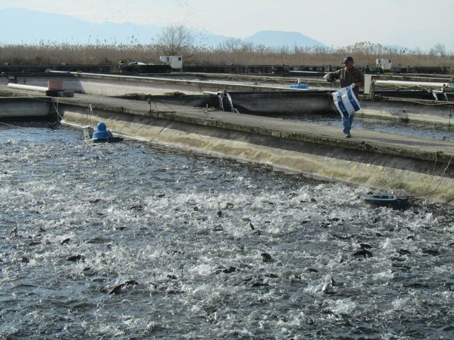 Υδατοκαλλιέργειες Άρτας:Χέλι και πέστροφα