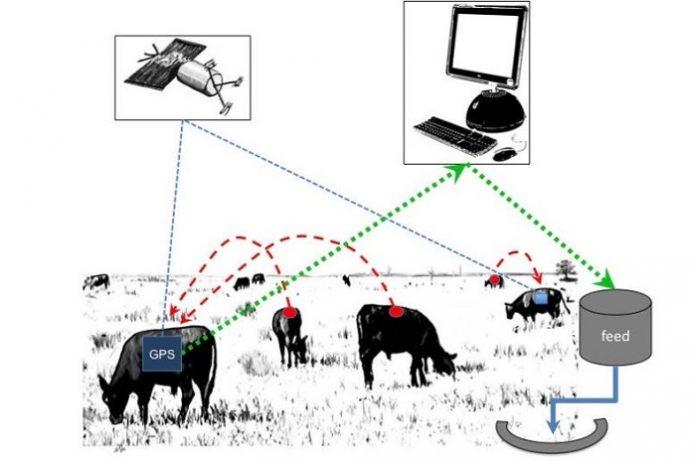 Παραγωγή Ακριβείας στην κτηνοτροφία