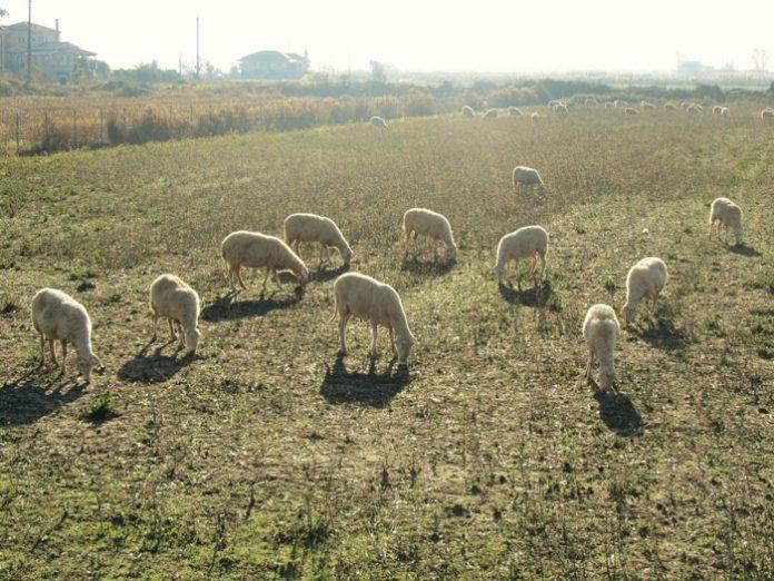Βαρέθηκαν να περιμένουν τον πρωθυπουργό οι κτηνοτρόφοι