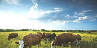 Πλαίσιο εφαρμογής για τους γενετικούς πόρους στην κτηνοτροφία στο νέο ΠΑΑ