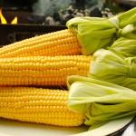 Στα σπάργανα η καλλιέργεια  γλυκού καλαμποκιού