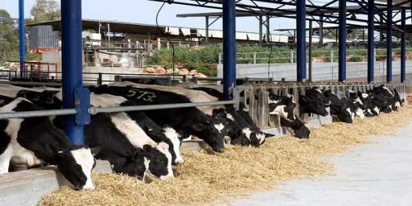 Έως τις 12 Σεπτεμβρίου η κατάθεση δικαιολογητικών για τις άδειες κτηνοτροφικών εγκαταστάσεων
