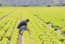 Τρίπολη: Ενημέρωση για νεοεισερχόμενους στον πρωτογενή τομέα