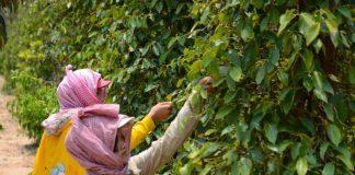 Υπό την προστασία της ΕΕ προϊόντα από Τουρκία και Καμπότζη