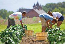 """Υπενθύμιση για υποβολή συμβάσεων για τις """"Βιολογικές Καλλιέργειες"""" από τον ΟΠΕΚΕΠΕ"""