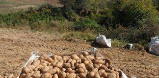 Άνω Βροντού & Ορεινή Σερρών: Φθηνές αλλά αδιάθετες οι πατάτες