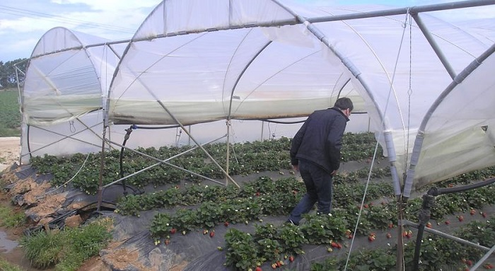 Ένα βιολογικό αγρόκτημα στον Πατραϊκό Κόλπο