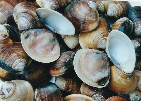 Έβρος: Άρση μέτρων στις ζώνες αλιείας Ζώντων Δίθυρων Μαλακίων
