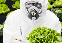 Μπροστά σε μία νέα γενιά γενετικά τροποποιημένων σπόρων;