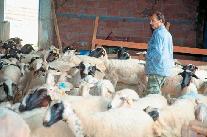 Τον κώδωνα του κινδύνου κρούουν οι κτηνοτρόφοι της Κρήτης