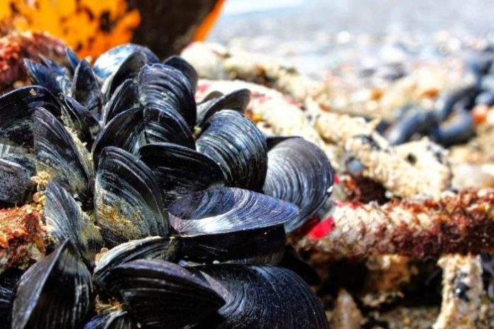 Απαγόρευση αλιείας ζώντων δίθυρων μαλακίων στον Έβρο