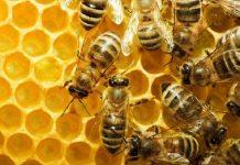 BAYER: Tα συμπεράσματα της EFSAδεν αιτιολογούν περιορισμούς στη χρήση των νεονικοτινοειδών