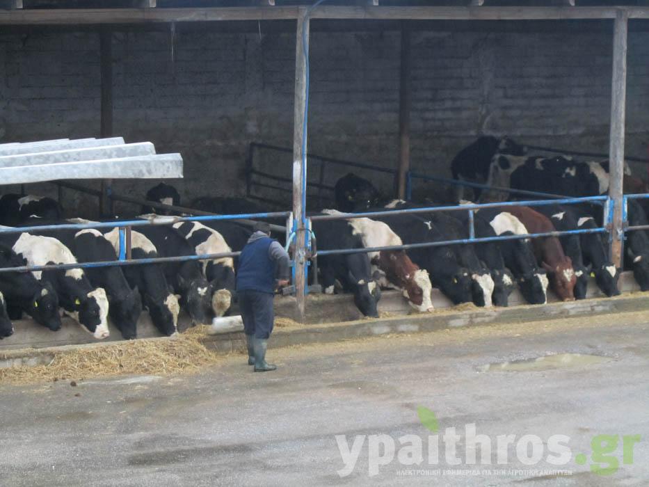 Φάρμα Τσομπάνος: Τέσσερις γενιές κτηνοτρόφοι