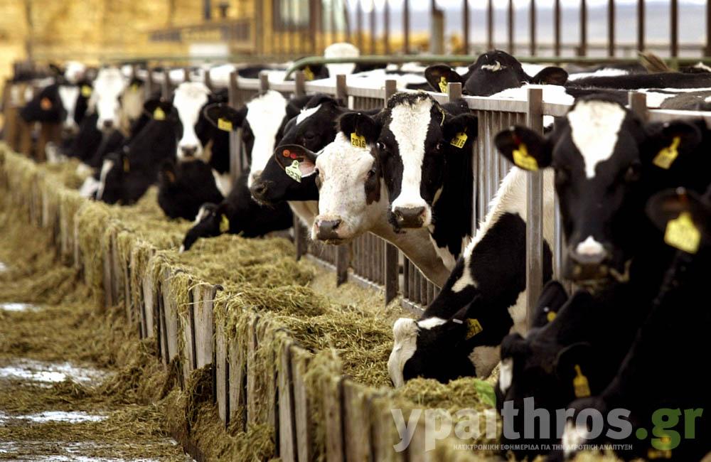 Φάρμα Ρόκου: Επένδυση στο αύριο με καθετοποίηση της παραγωγής