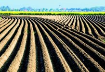 Οι ενδεδειγμένες πολιτικές για ανταγωνιστική, βιώσιμη και παραγωγική γεωργία και κτηνοτροφία