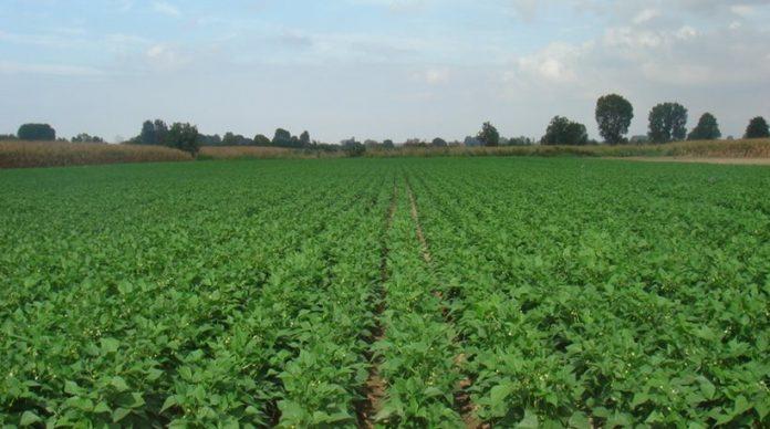 Ανάγκη οργάνωσης των Ελλήνων παραγωγών φρούτων/λαχανικών σε ΟΠ