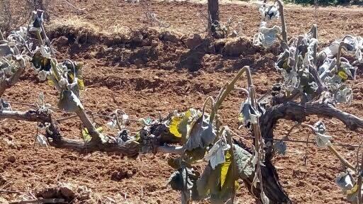 Μεγάλες ζημιές από παγετό σε καλλιέργειες της Τρίπολης