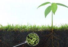 Πράσινη λύση η «έξυπνη αξιοποίηση» του εδάφους