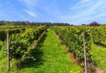 Π.Ε. Σερρών: Ο ΕΛΓΑ για την ασφάλιση και προστασία της αγροτικής δραστηριότητας