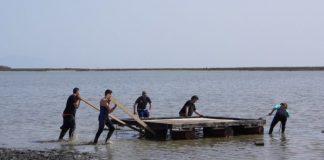 «Στέγη» αναπαραγωγής γλαρονιών στην λιμνοθάλασσα Αλυκών Ν. Κεσσάνης