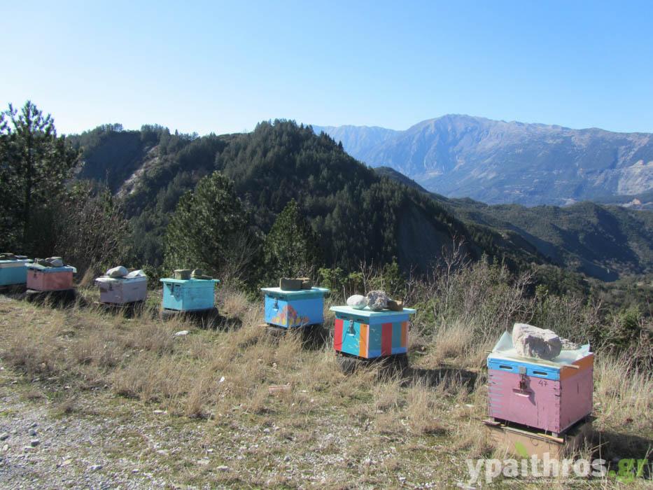 Τζουμέρκα: μέλι, βατόμουρα, ράφτινγκ και… igloo στα 1.000 μέτρα υψόμετρο