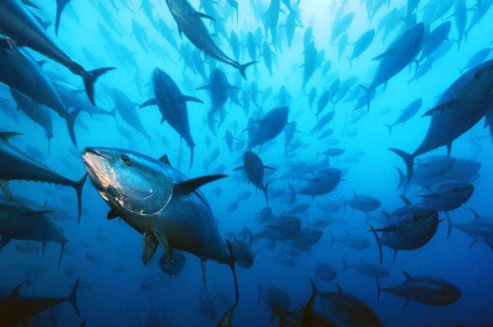 Αλιεία στη Μεσόγειο: Ο ασθενής είναι άρρωστος, αλλά ακόμη αναπνέει