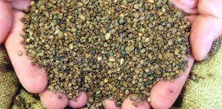 Βιολογικό λίπασμα τα υποπροϊόντα ελαιολάδου