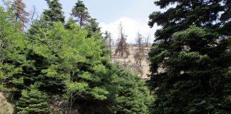 ΓΕΩΤΕΕ: Τροχοπέδη για τη σύνταξη του Εθνικού Κτηματολογίου η έλλειψη κυρωμένων δασικών χαρτών