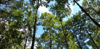 Oι στόχοι της ΚΑΠ 2015-2020 για τη διαχείριση των δασών