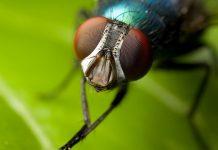 LIFE-BIODELEAR: Μία καινοτομία για την καταπολέμηση της μύγας της Μεσογείου