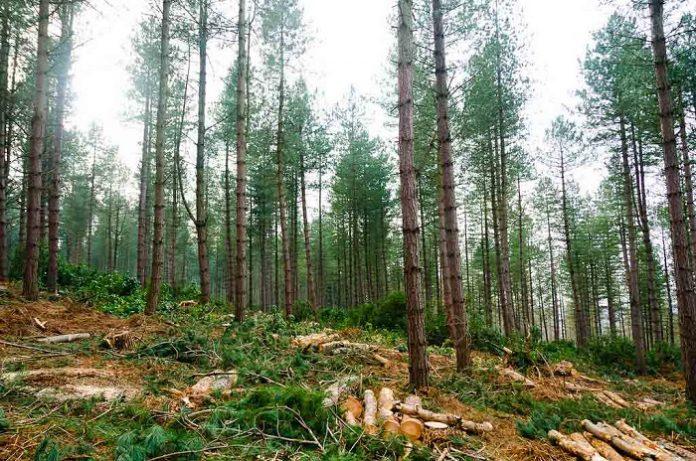 Πάνω από 60.000 τα είδη δένδρων στη γη