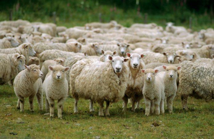 Εξαιρούνται οι κτηνίατροι των ΑΣ από τον «κτηνίατρο εκτροφής»