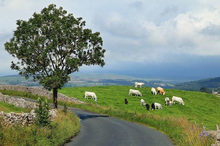 Τα μνημόνια, η Ιρλανδία και εμείς