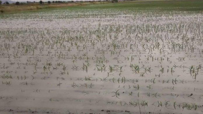 Αύριο η καταβολή των ενισχύσεων του ΕΛΓΑ προς τους πλημμυροπαθείς αγρότες