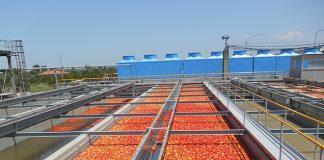 Στα 55,8 ευρώ/στρ η συνδεδεμένη της βιομηχανικής ντομάτας