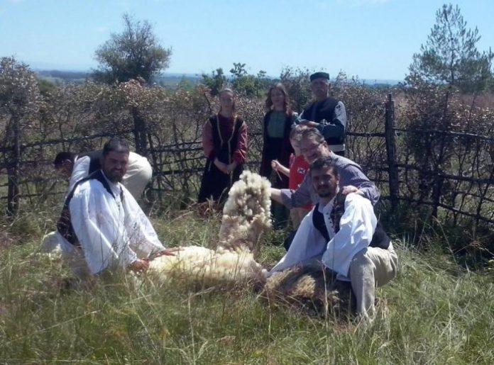 Πιερία: Αναβίωσε η παραδοσιακή γιορτή κουράς των προβάτων