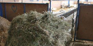 Στροφή από τα μεταλλαγμένα στα κτηνοτροφικά φυτά