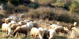 Το Υπουργείο Αγροτικής Ανάπτυξης & Τροφίμων γνωστοποιεί ότι προκειμένου η χώρα μας να ανταποκριθεί στις απαιτήσεις του Κανονισμού (ΕΕ) 1305/2013 για να έχει τη δυνατότητα να συνεχίσει να ενισχύει τις περιοχές με φυσικούς περιορισμούς (εκτός των ορεινών) θα πρέπει να προβεί σε νέα οριοθέτησή τους.